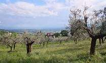 Terreno Agricolo in vendita a Assisi, 1 locali, zona Zona: Viole., prezzo € 100.000 | CambioCasa.it