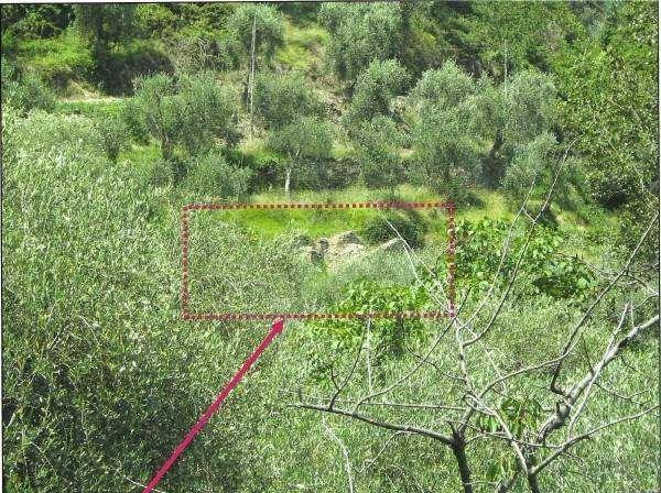 Stellanello Vendita Terreno Edificabile Immagine 3