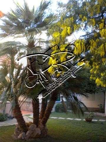 Villa in vendita a Ceriale, 4 locali, prezzo € 450.000 | Cambio Casa.it