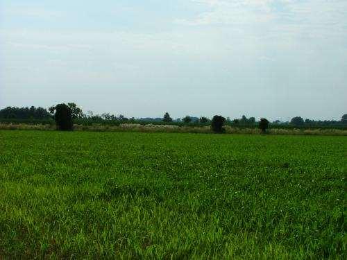 Terreno Agricolo in Vendita a Busto Garolfo