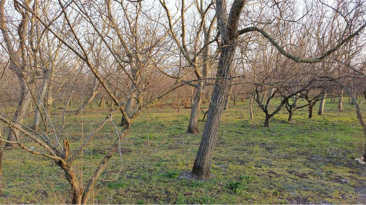 Cicciano Vendita Terreno Agricolo