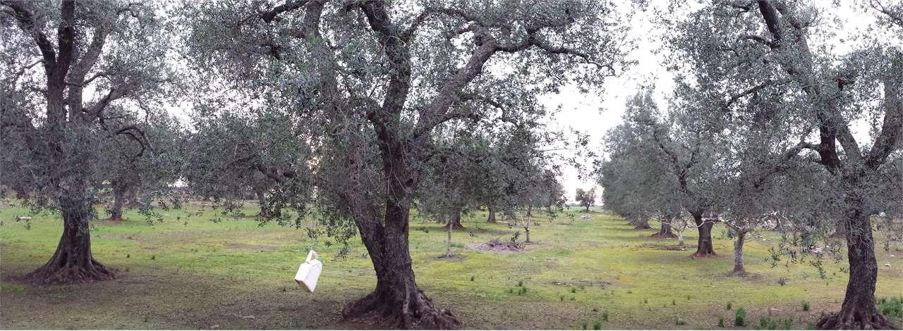 Terreno Agricolo in Vendita a San Donaci