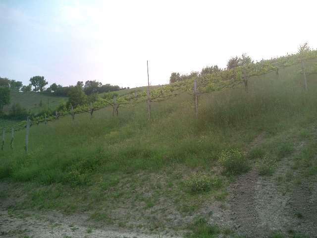 Terreno Agricolo in vendita a Savignano sul Panaro, 9999 locali, zona Zona: Castello di Savignano sul Panaro, prezzo € 75.000 | Cambio Casa.it