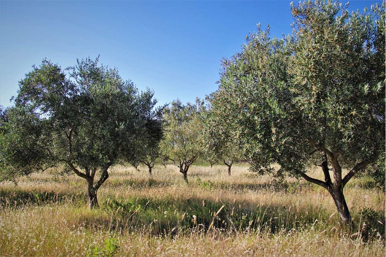 Azienda Agricola in Vendita a Cagliari