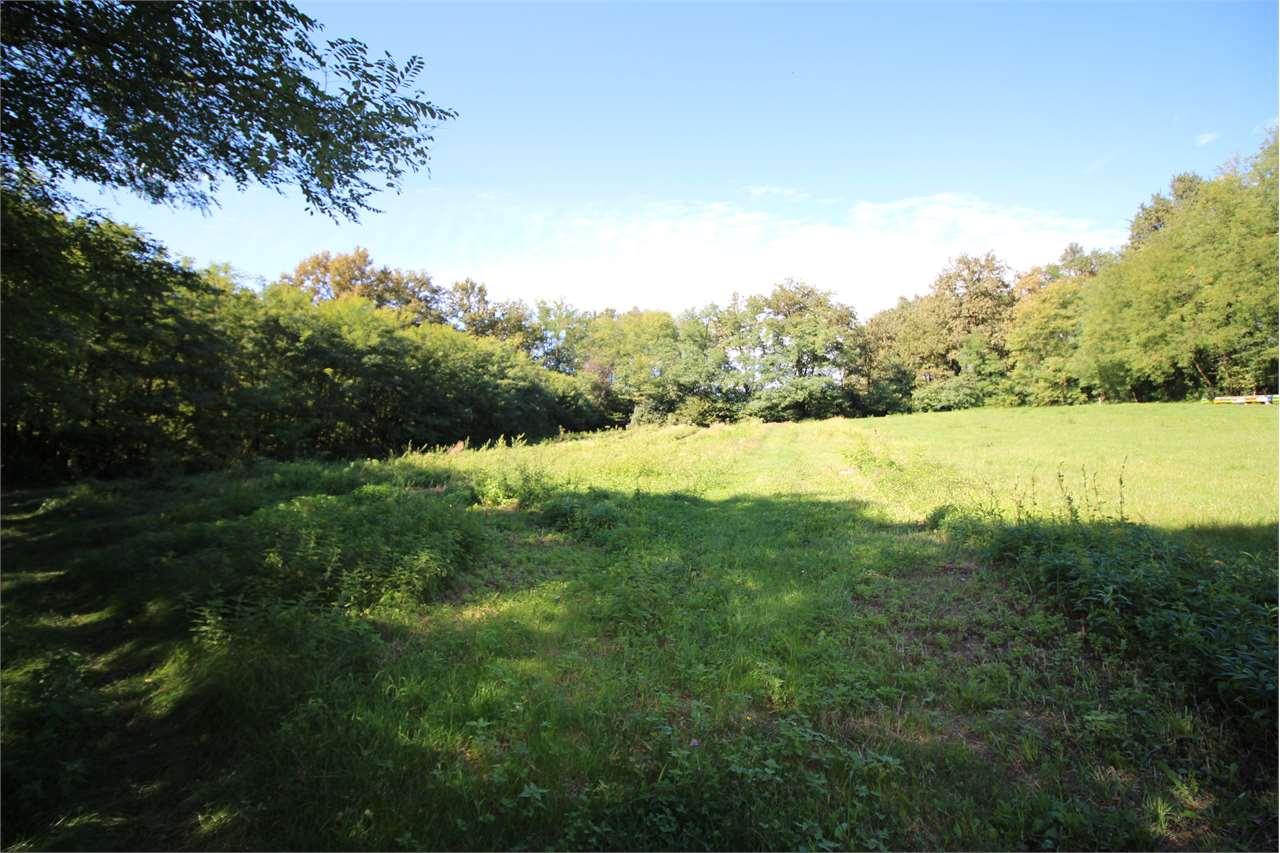 Terreno agricolo in vendita - 7750 mq