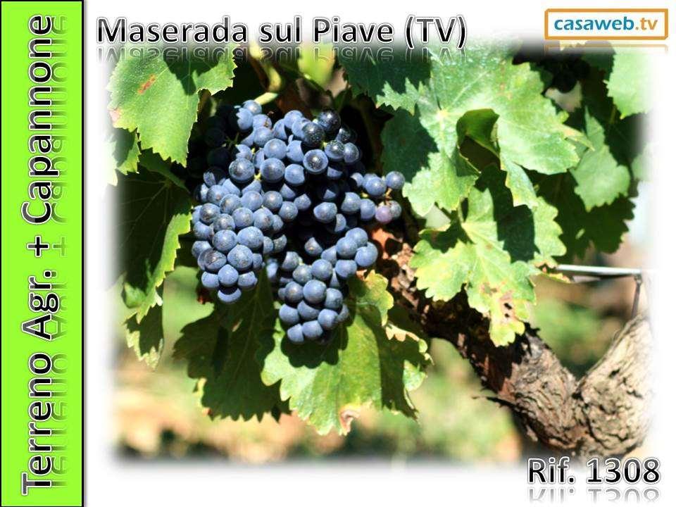 Vendita Terreno Agricolo Maserada sul Piave