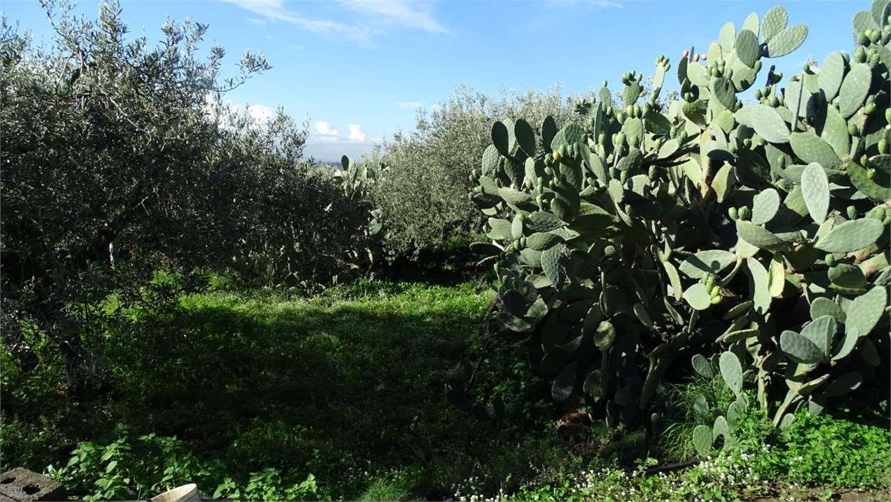 Camporotondo Etneo