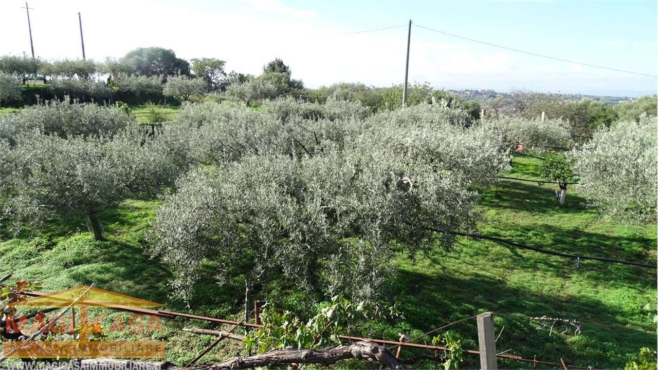 Terreno Agricolo Camporotondo Etneo 1201