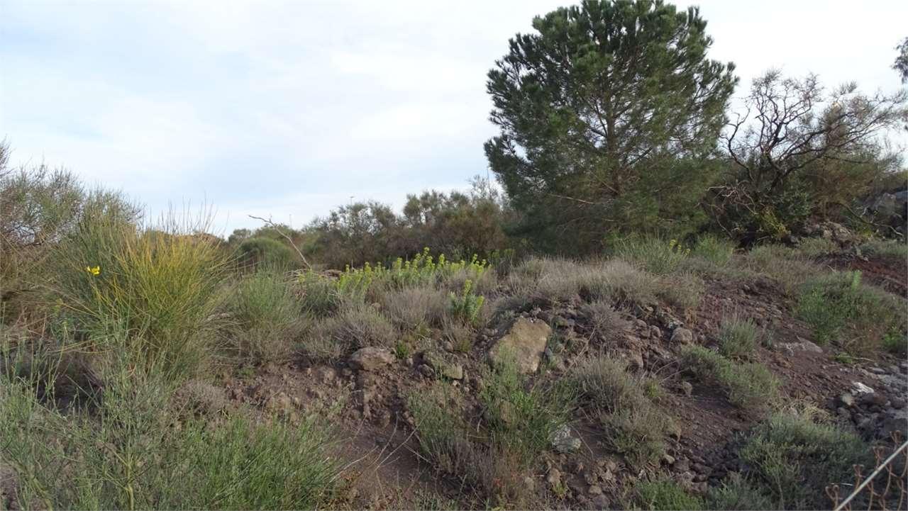 Terreno Agricolo in Vendita Camporotondo Etneo