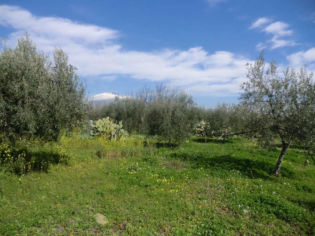 Terreno Agricolo in Vendita Belpasso