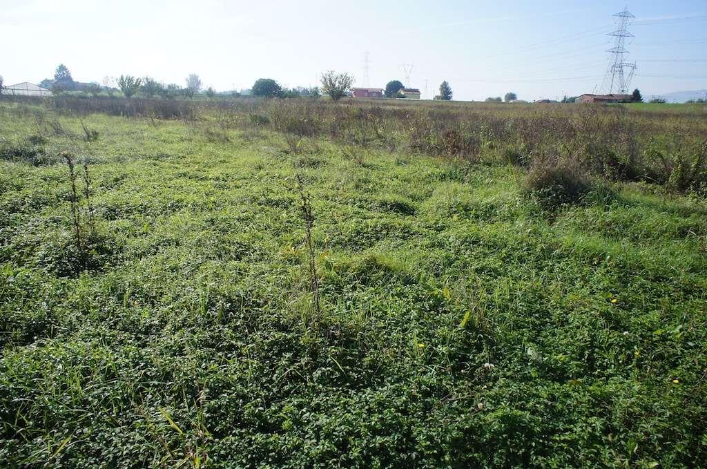 Terreno Agricolo in vendita a Pescia, 9999 locali, prezzo € 120.000 | CambioCasa.it