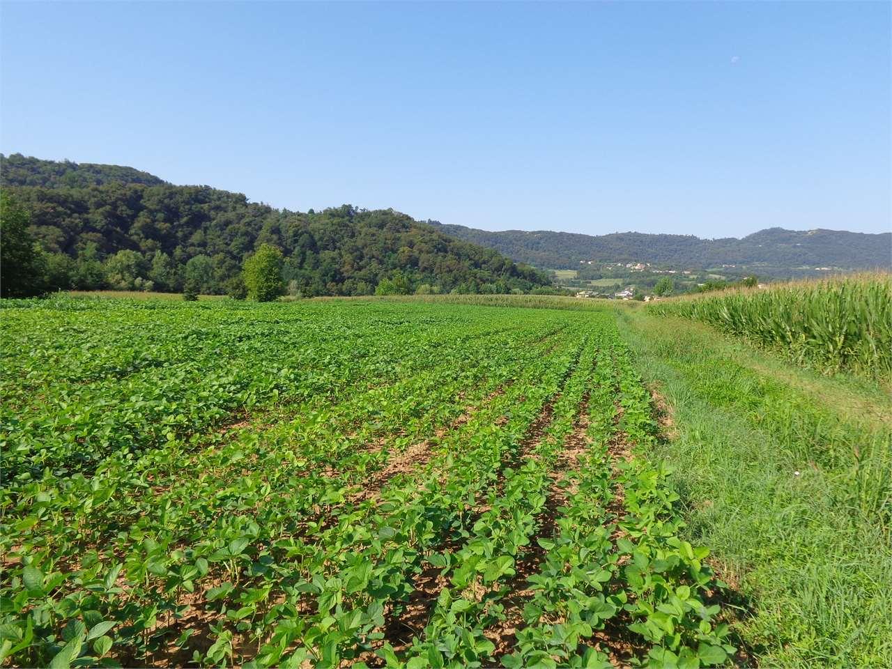 Terreno Agricolo in vendita a Isola Vicentina, 1 locali, prezzo € 44.000 | CambioCasa.it