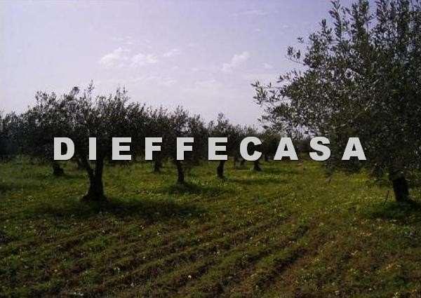 Terreno Agricolo in vendita a Marsala, 9999 locali, zona Località: Periferia lato Trapani, prezzo € 3.500 | CambioCasa.it