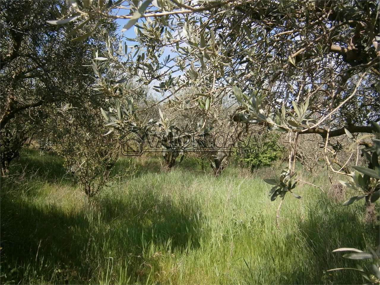 Terreno Agricolo Monte Compatri 25col