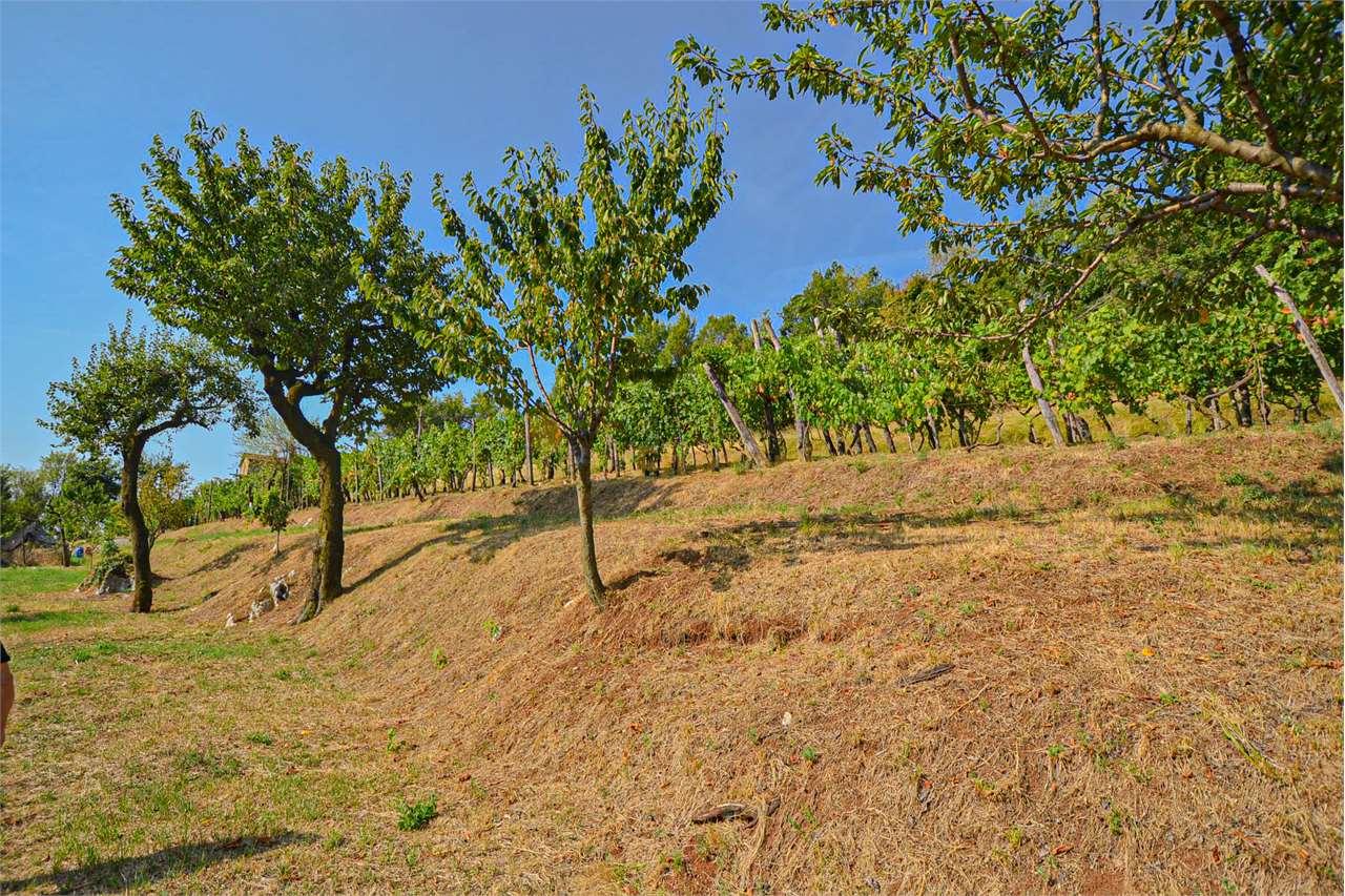 Terreno Agricolo in vendita a Paitone, 9999 locali, zona ena, prezzo € 59.000 | PortaleAgenzieImmobiliari.it