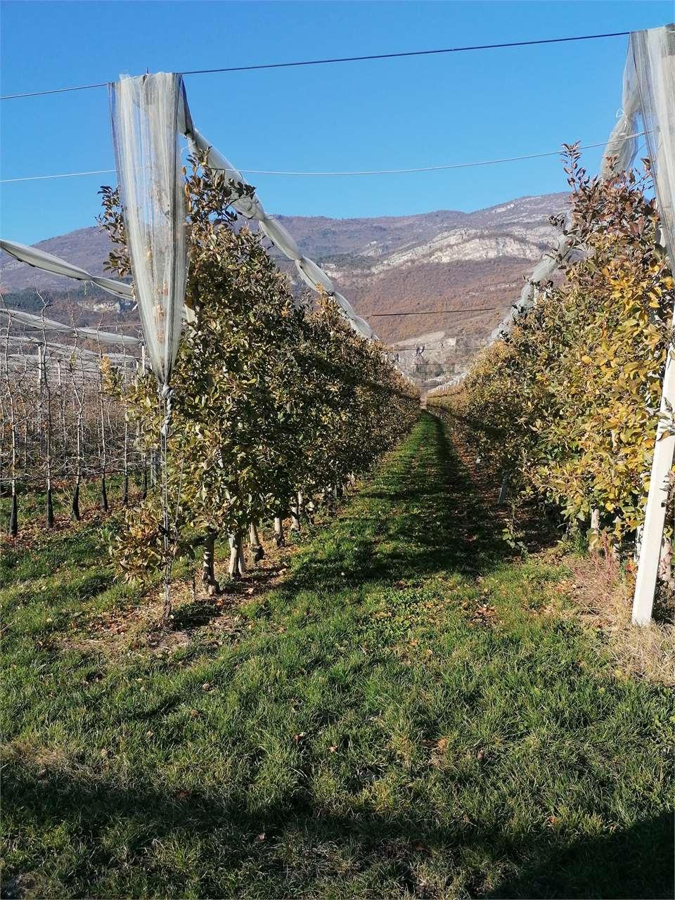 Foto terreno in vendita a Volano (Trento)