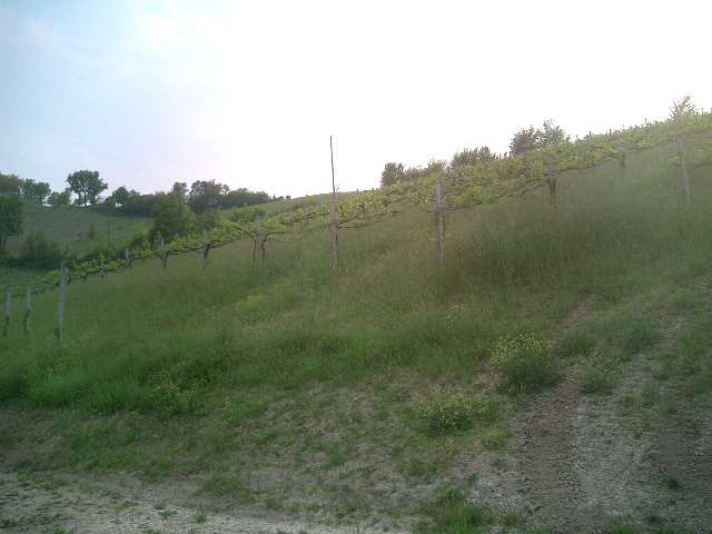 Terreno Agricolo in vendita a Savignano sul Panaro, 1 locali, zona Zona: Castello di Savignano sul Panaro, prezzo € 75.000 | CambioCasa.it