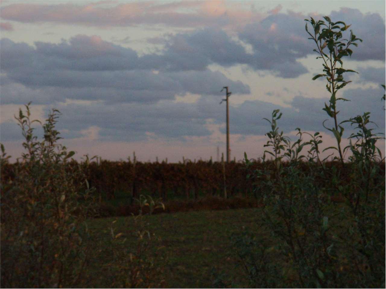 Vendita Terreno Agricolo Motta di Livenza