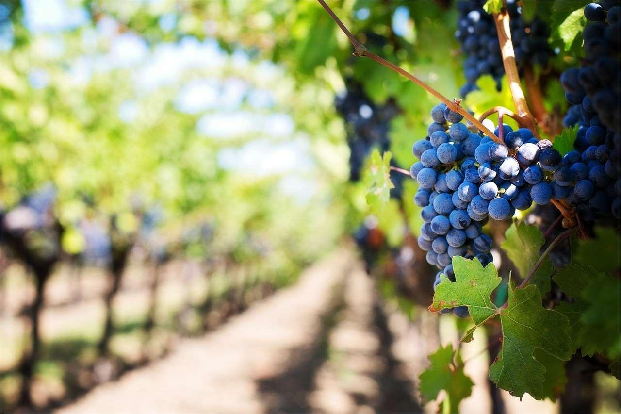 Terreno Agricolo in vendita a Gradisca d'Isonzo, 9999 locali, Trattative riservate | CambioCasa.it