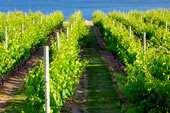 Terreno Agricolo in vendita a Zenson di Piave, 1 locali, prezzo € 30.000 | CambioCasa.it